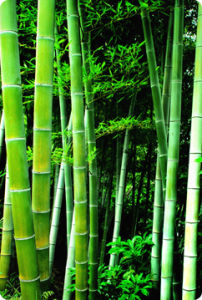 Skin-Clinic-Margate-bamboo-massage-202x300